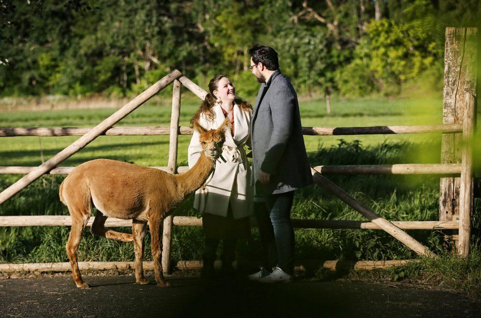fotoshoot met de alpaca's van Zonneveld